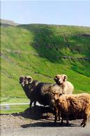 Sheep on the Faroe Islands Journal by CS Creations
