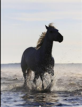 Horse in the Sea by Animus Designs