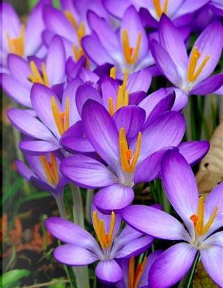 Purple Flower Notebook by College Notebooks