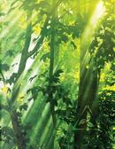 Sun-streak Leaves Grid Sketchbook by N. D. Author Services