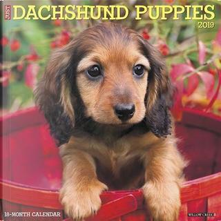 Just Dachshund Puppies 2019 Calendar by Willow Creek Press