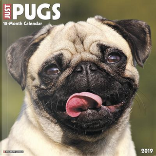 Just Pugs 2019 Calendar by Willow Creek Press