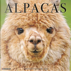 Alpacas 2019 Calendar by Willow Creek Press