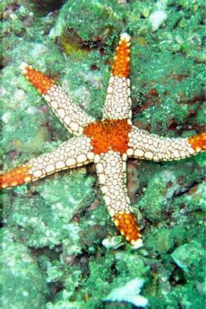 Starfish Journal by PlainSimpleBooks