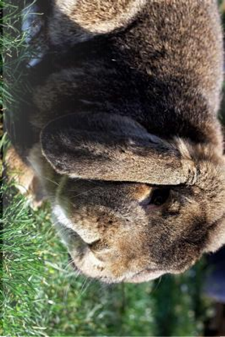 Fluffy Little Flop Eared Bunny in the Grass Journal by Pen2 Paper