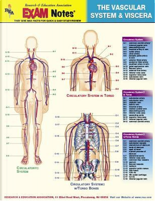 Vascular System & Viscera Anatomy Exam Notes by Research And Education Association