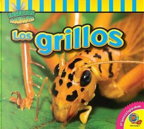 Los Grillos / Crickets by John Willis