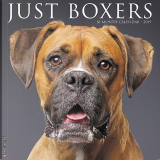 Just Boxers 2019 Calendar by Willow Creek Press
