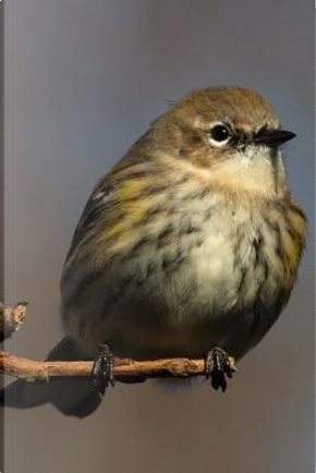 Yellow-Rumped Warbler (Dendroica Coronata) Bird Journal by Cool Image