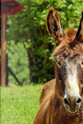 Donkey Stare Down Journal by Pen2 Paper