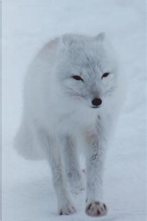 Polar Fox Journal by Cool Image Press