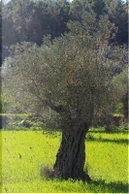 Olive Tree Journal by CS Creations