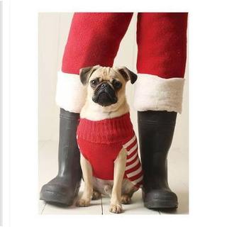 Pug Elf Holiday Half Notecard by Galison