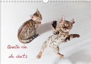 Quelle vie de chats by Calvendo Verlag GmbH