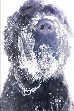 Black Russian Terrier with a Beard Full of Snow Journal by Dog Lovers Journal