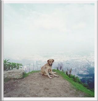 Dog Days Bogotá by