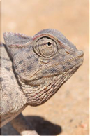 Chameleon in Africa Journal by CS Creations
