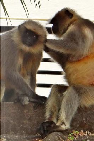 Hanuman Langur Monkeys Journal by Cool Image