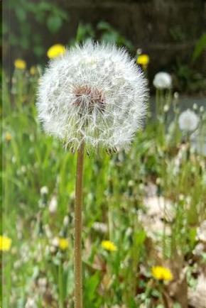 Dandelion Seeds Flower Journal by Distinctive Journals