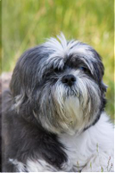 Shih Tzu Dog Journal by CS Creations