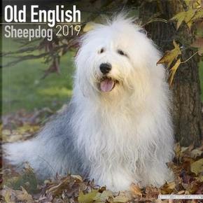 Old English Sheepdog Calendar 2019 (Square) by AVONSIDE PUBLISHING LTD