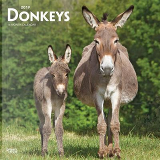 Donkeys 2019 Calendar by Inc. Browntrout Publishers