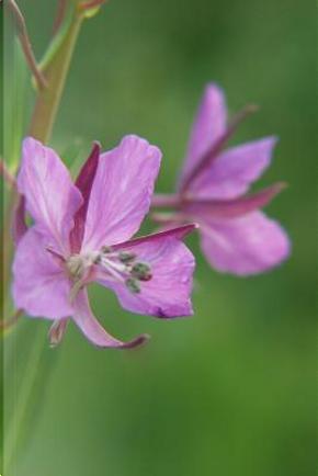 Pinkish Purple Wildflower by Legacy
