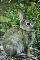The Little Wild Rabbit Journal by CS Creations