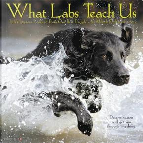 What Labs Teach Us 2019 Calendar by Willow Creek Press