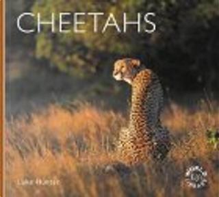 Cheetahs by Luke Hunter