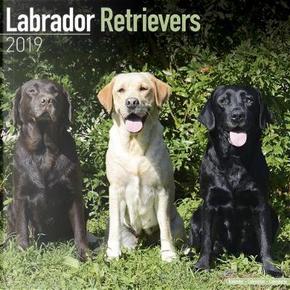 Labrador Retrievers Calendar 2019 (Square) by AVONSIDE PUBLISHING LTD