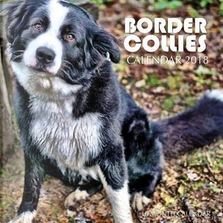 Border Collies Calendar 2018 by Paul Jenson
