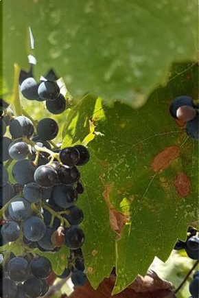 Notebook Grapes on the Vine in a Vinyard by Wild Pages Press