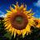 Sunny from Cucinallegra