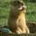 Marmott79